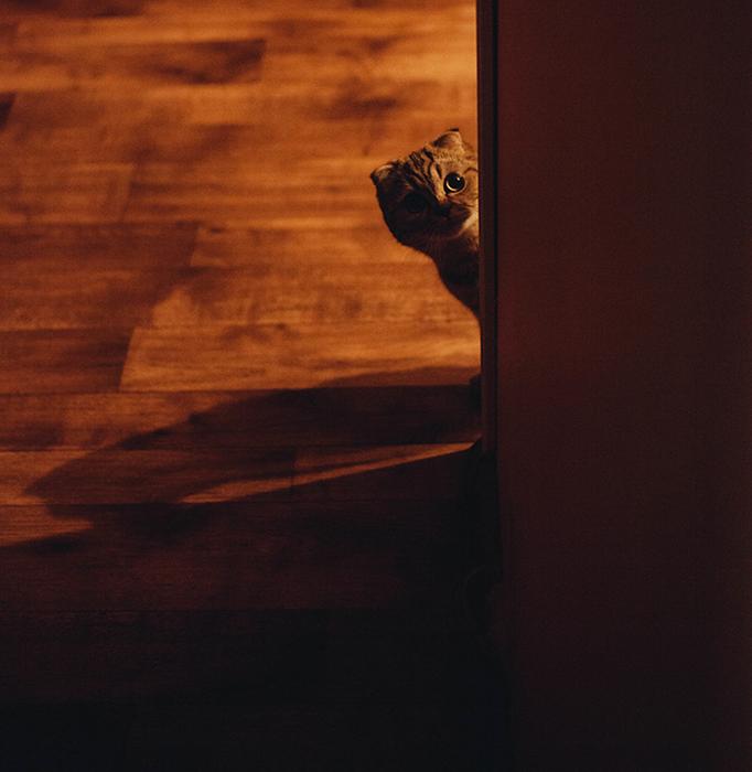tungsten light cat peeking from room - 8 suggerimenti per scattare foto con luce al tungsteno blog