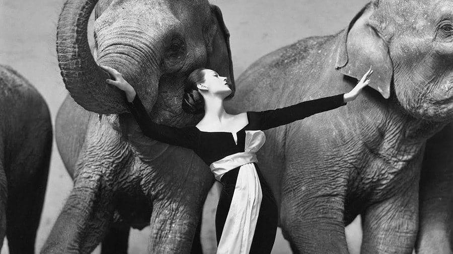 maxresdefault 1 - I fotografi più famosi al mondo: lista aggiornata al 2021  blog